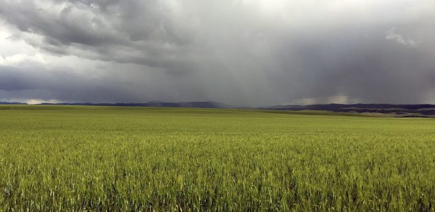 New publications available on wheat production in Idaho