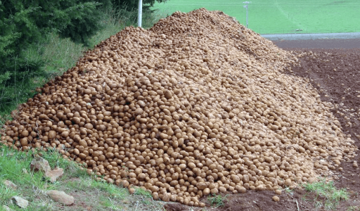 potato cull pile
