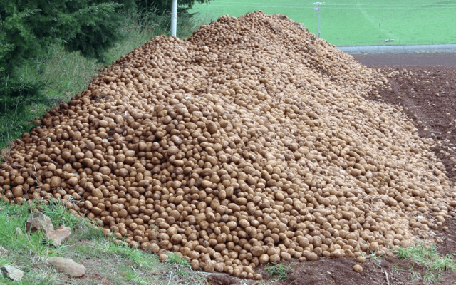 Destroy Cull Potatoes Now!